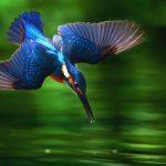 levensmissie coach deventer, roeping zingeving, als je ware natuur volgt dan doe je wat je te doen hebt.